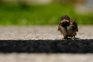 Der aus dem Nest fiel