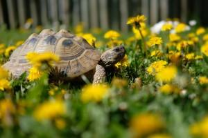 Schildkrötenparadies